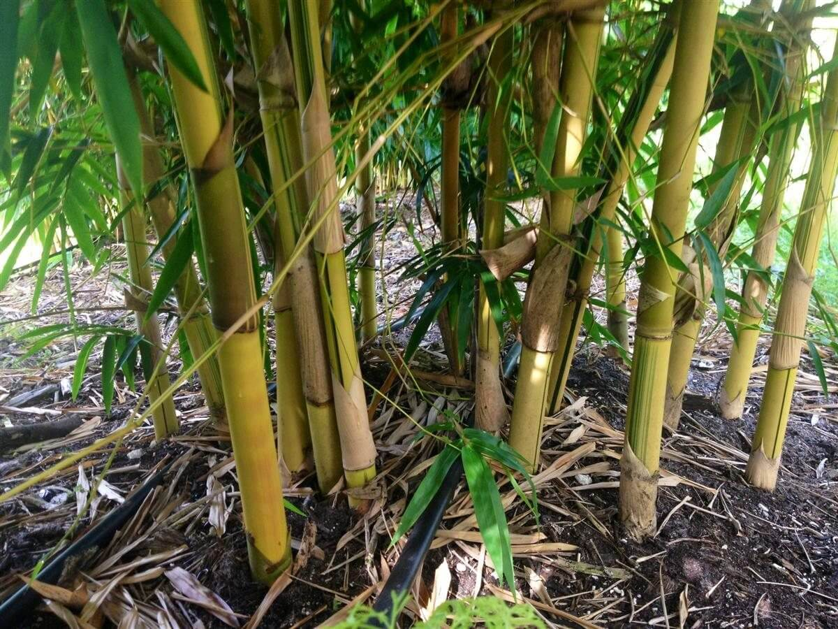 bambuswald/© nat/ürliche Nisth/ülsen aus Bambus ca Nistr/öhren /& Bruth/ülsen als F/üllmaterial f/ür Bienenhotel 15cm L/änge f/ür Wildbienen 100/% /ökologische Bambusr/öhrchen f/ür Insektenhotel