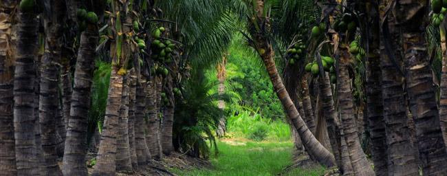 Palm Growers